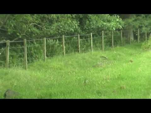 Air Rifle Rabbit Shooting Weihrauch HW100