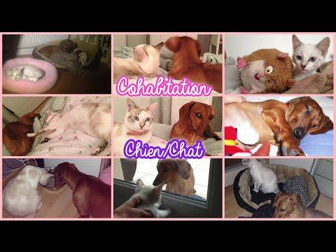 ♡ Cohabitation chien/chat : Jalousie, 1ère rencontre - FAQ