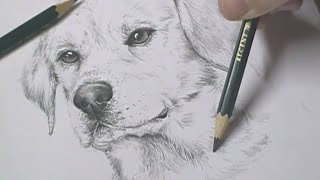 Speed Drawing - Cachorro (Dog)
