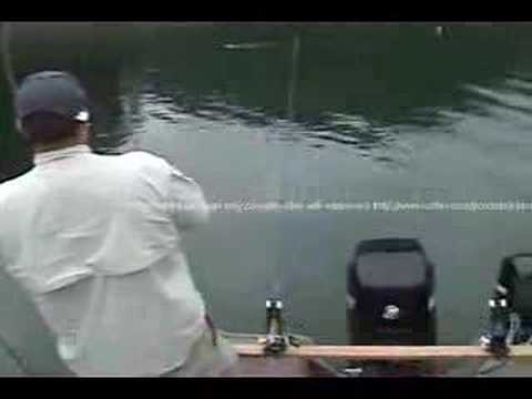 striper fishing on lake cumberland