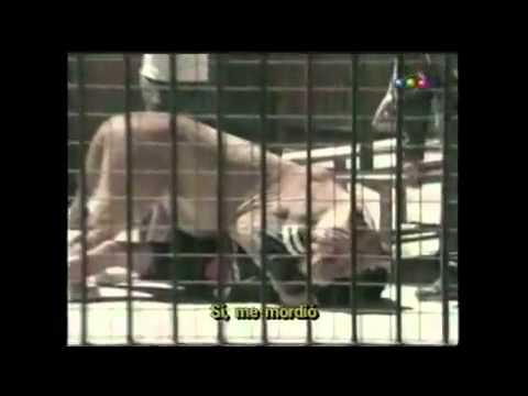 Videomatch - Bienvenido a la argentina 3 - Zoológico de Luján 2 - Tigre en el baño 1