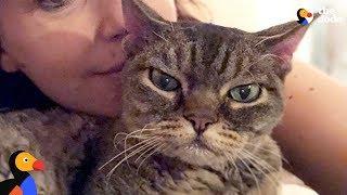 Aggressive cat s..