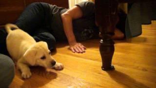 Pup & Kitten Meet for 1st Time