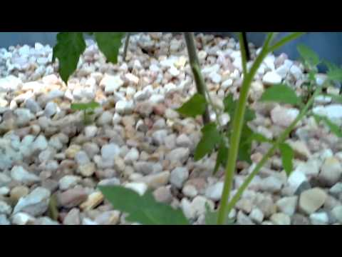 Backyard Aquaponics: DIY System To Farm Fish With Vegetables - Aquaponics