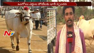 Special Games to Increase Focus on Ongole Bulls || Ongole Cattle || NTV