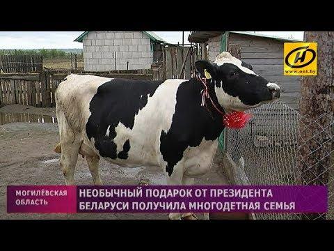 Необычный подарок от Президента Беларуси получила многодетная семья