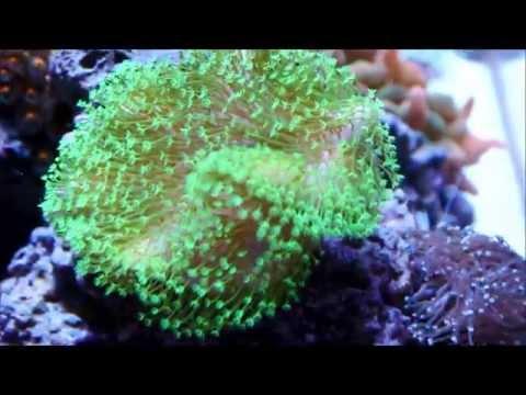 Start of a 400 gallon starfire salt water reef tank sps for Starting a saltwater fish tank