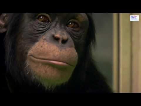 Обезьяны УМНЕЕ людей - невероятные способности обезьян