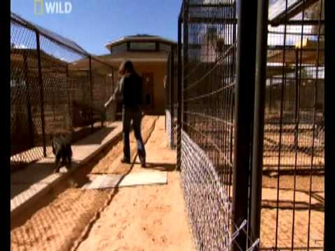 DogTown Pit bull rescue part 3/4