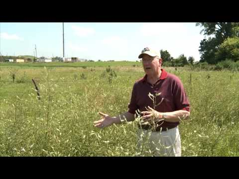 Eye on Agriculture Today: Toxic Weeds in Hay and Pastures