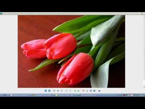 Поздравление с 8 марта от сайта Живой роман