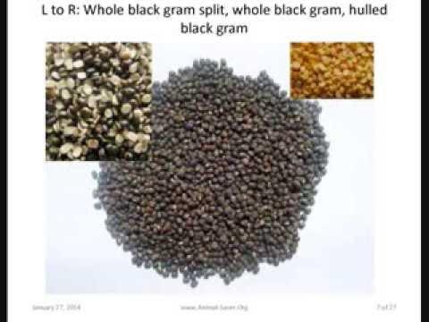 Header of black gram