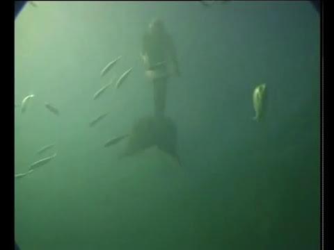 ¿Una Sirena o un buen Nadador?