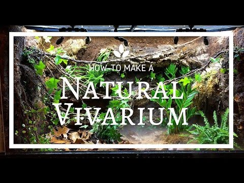 How to build a Natural Vivarium (From Scratch)!
