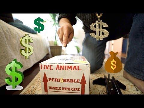 Big Money Unboxing