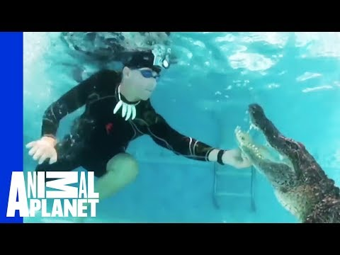 Unwelcome Gator In The Family Swimming Pool | Gator Boys