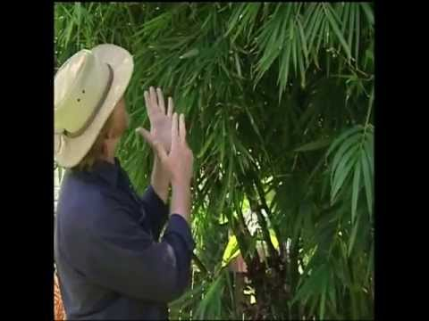 How to grow, maintain and propagate bamboo - growing bamboo