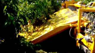 Peach mechanical harvesting in Spain - Raccolta meccanica percoche in Spagna 5