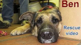 Dog rescue: Sweet Ben.