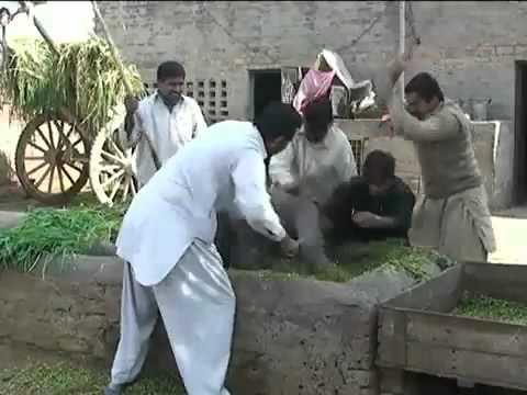 pakistani  punjabi funny song