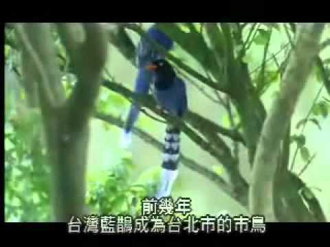 【陽明山国家公園】ヤマムスメの物語-長尾陣(漢名の別名)