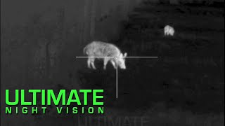 15 Hogs Down with the Pulsar Trail XQ38 Thermal Scope and Armasight Zeus Pro 640 50mm
