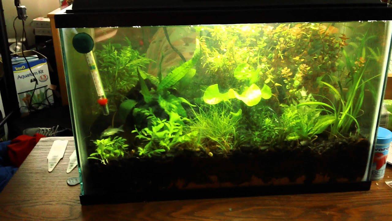 5 Gallon Planted Betta Tank Update New Fish Plants