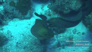 DNS Diving, Grand Cayman, Neptunes Wall