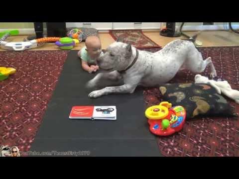 #PitBull DOG TEACHES BABY TO CRAWL   TexasGirly1979