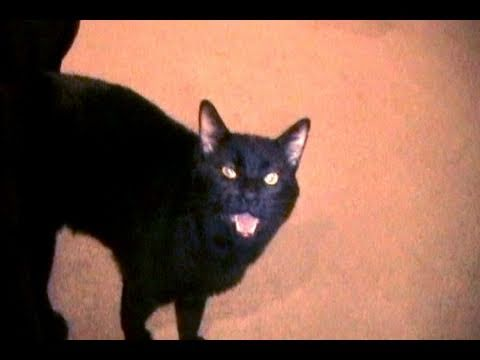 Youtube Sylvester The Talking Cat