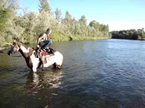 horse water jump