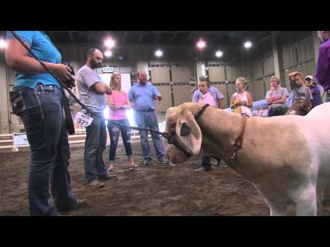 Support Michigan Livestock Expo Sale-abration Auction
