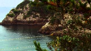 Download The Cove  Official Trailer HD MP3