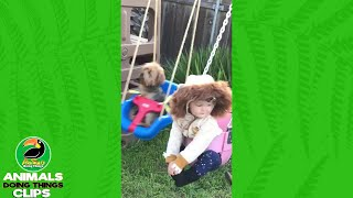 Dog In A Swing Makes A Funny Face | Animals Doing Things Clips