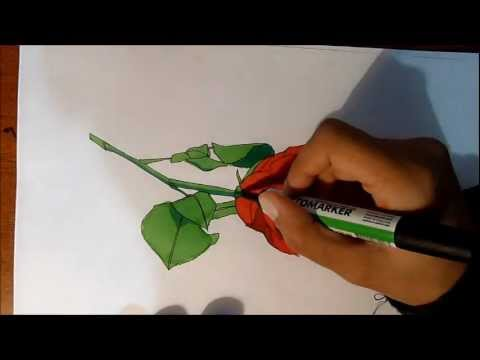 Simple and easy Rose Drawing in colour | Awesome Promarker ... Simple Drawing In Pencil