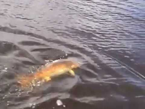 Redfish fishing at Flamingo Everglades National Park