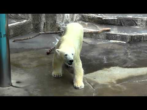 キロルの「ごはんまだですか?」浜松市動物園 2011.07.30