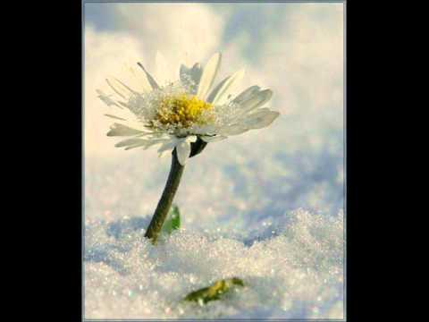 Юта - Хлопья снега