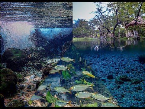Traumhafte Unterwasserwelt in Mexico - Cichliden Salmler und Kärpflinge Schnorcheln im Aquarium