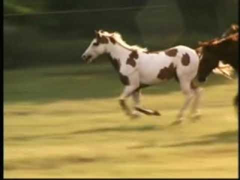 Ramón Ayala - Del Otro Lado Del Portón