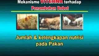 vitamin ternak HP: 0878 3684 3355 / Pin BB: 3282 4C6D