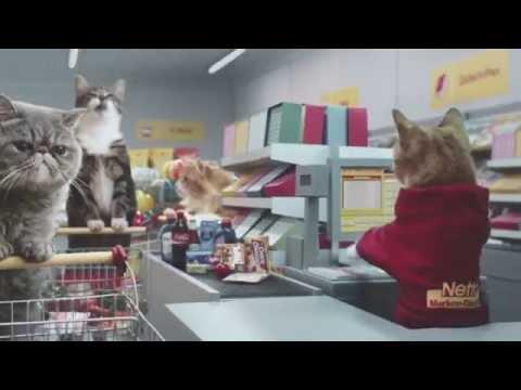 los gatos salen de compras y conquistan internet
