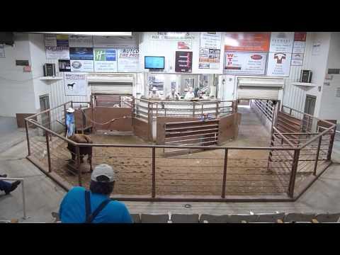Amarillo Livestock Auction Spot1