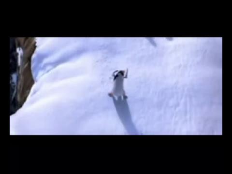 El pinguino bailarin