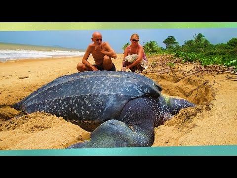 ★ Größten Tiere Der Welt (FullHD) - Top 10 Größten-Beispiele Von Bereits Erschreckenden Tiere!
