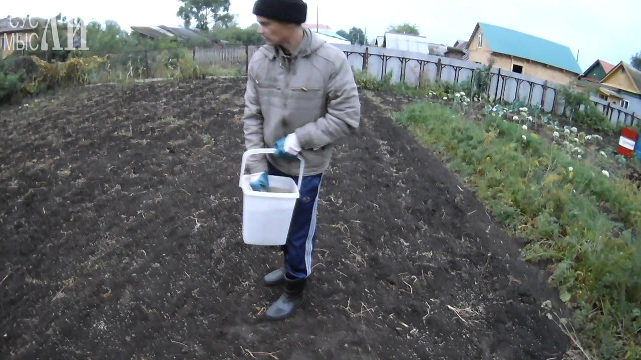 После картофеля сажаем рожь 189