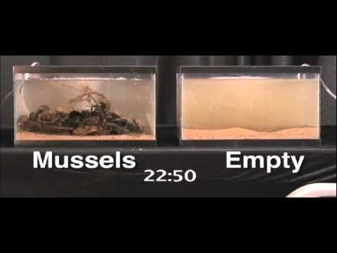 How to Clean Mussels recommend