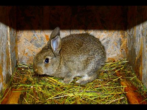 Как я определяю сукрольность крольчих