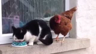 Cock vs Pussy : The Legends