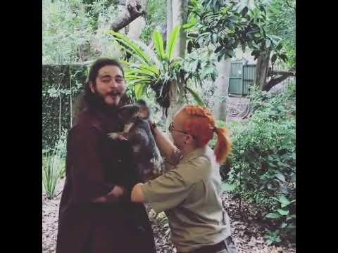 Post Malone Happy To Hold A Koala